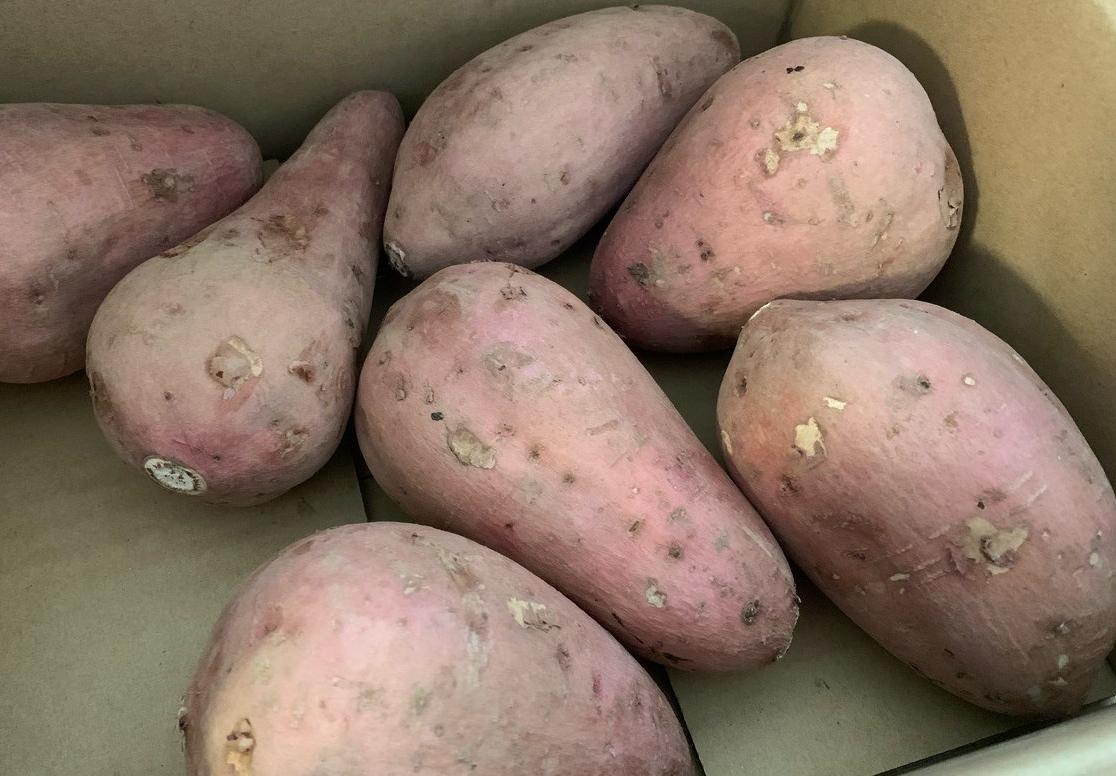 鹿児島県産の『安納芋』2Kg